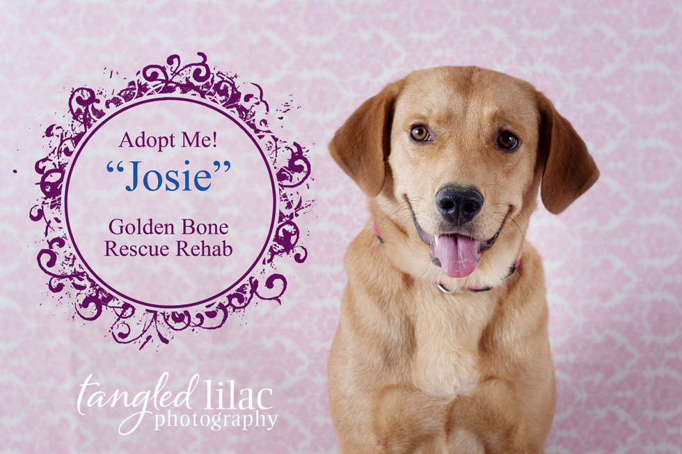 Golden Bone Rescue