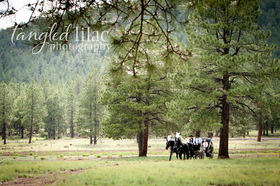 horse and carriage wedding