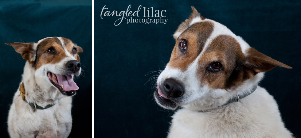 adoptable dog photography sedona arizona