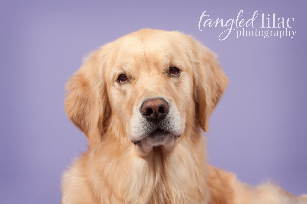 Dog Photographer Phoenix Arizona