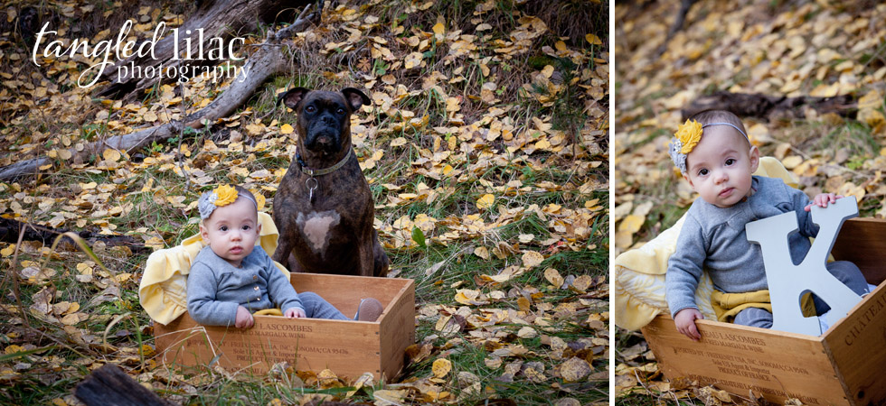 baby girl, children photography, pet photography, wine box, boxer