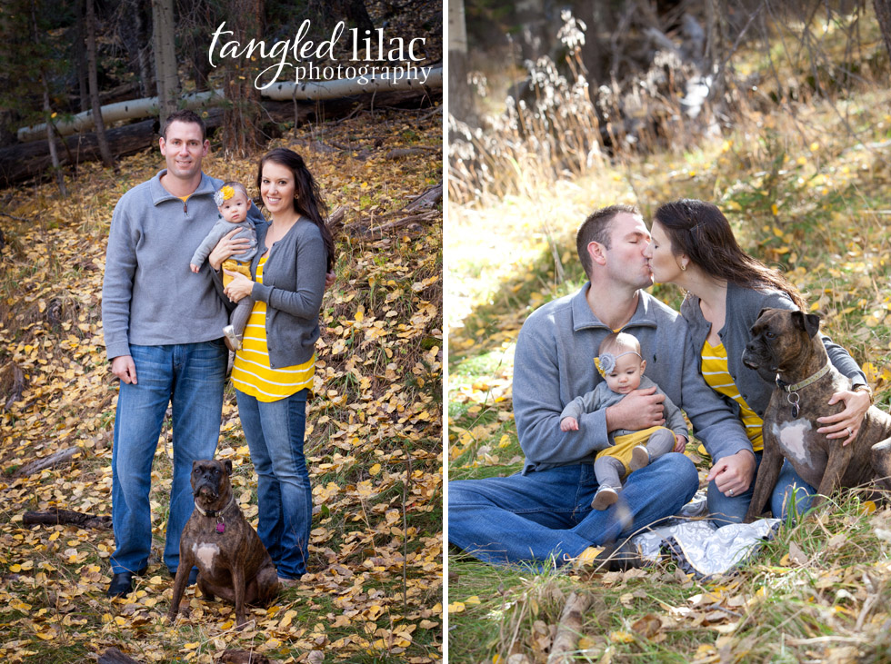 family photograph, dog, boxer, pet photography, outdoor