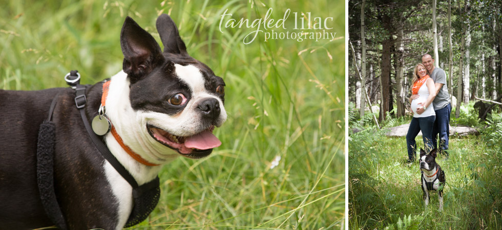 Flagstaff-maternity-outdoor-bulldog-black