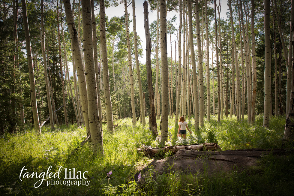 flagstaff_aspens_photography