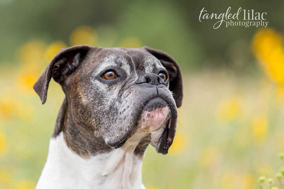 004-flagstaff-pet-boxers