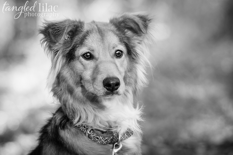 027-Arizona-Pet-Dog-Portrait