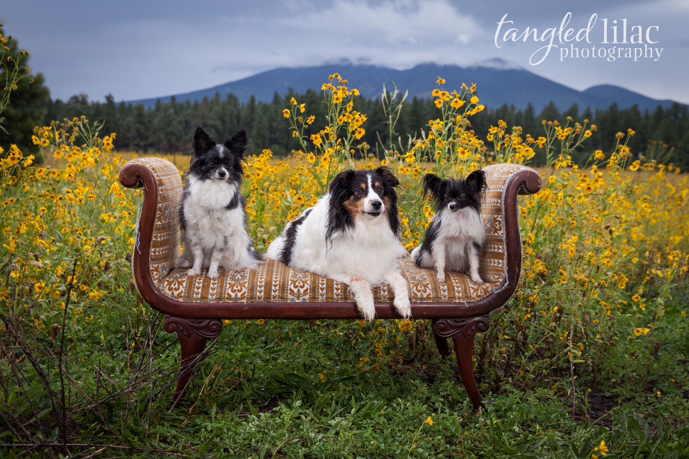 082-sedona-pet-photographer-flagstaff