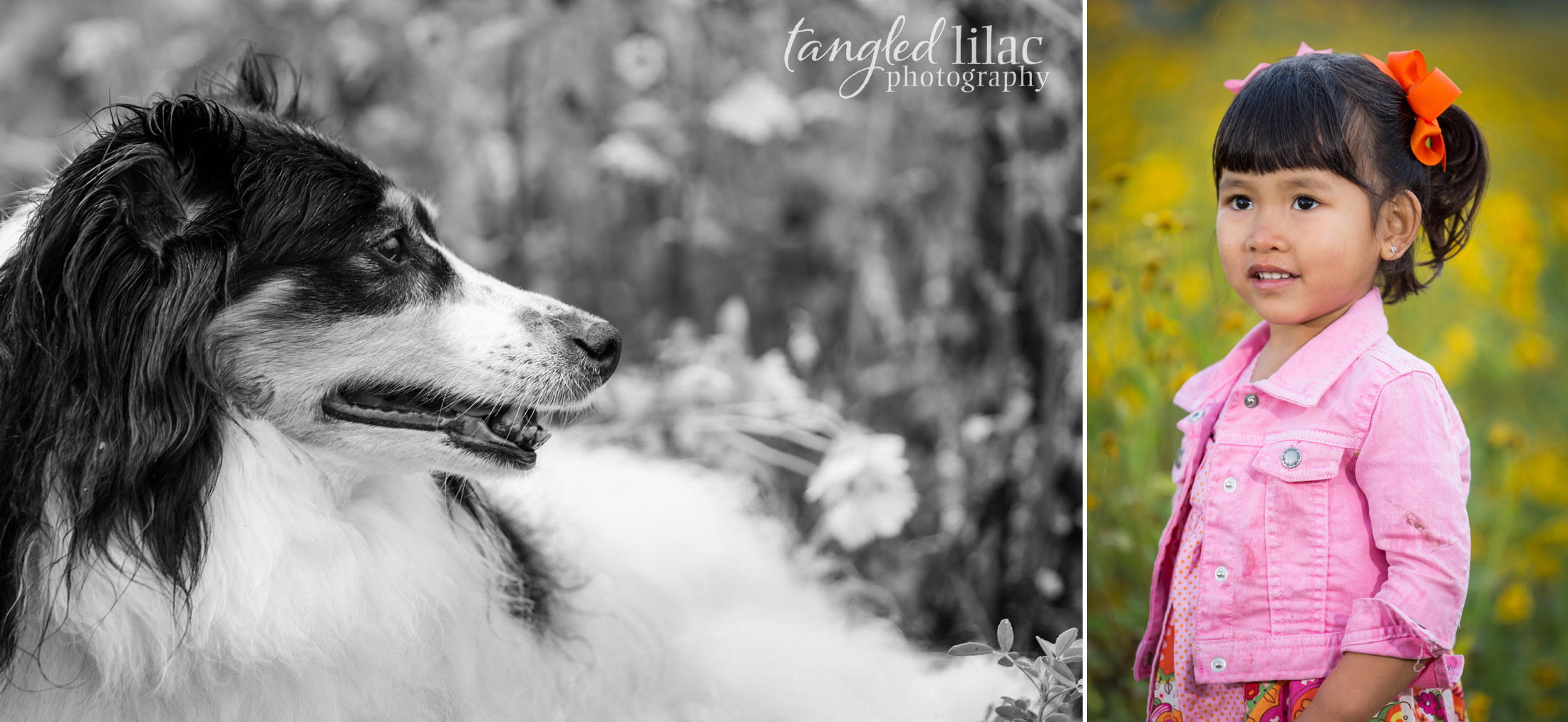 083-sedona-pet-photographer-flagstaff