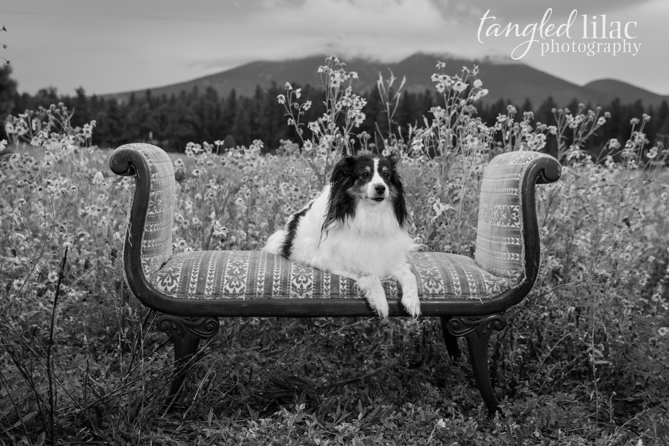 085-sedona-pet-photographer-flagstaff