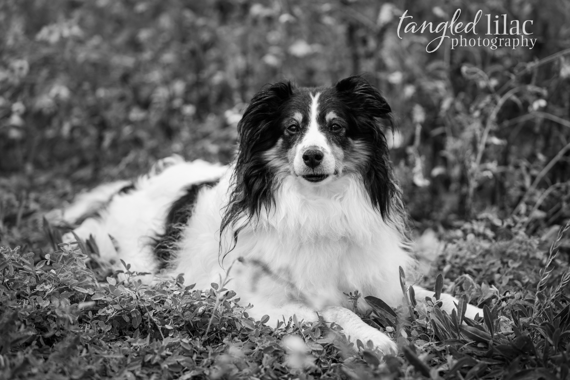 087-sedona-pet-photographer-flagstaff
