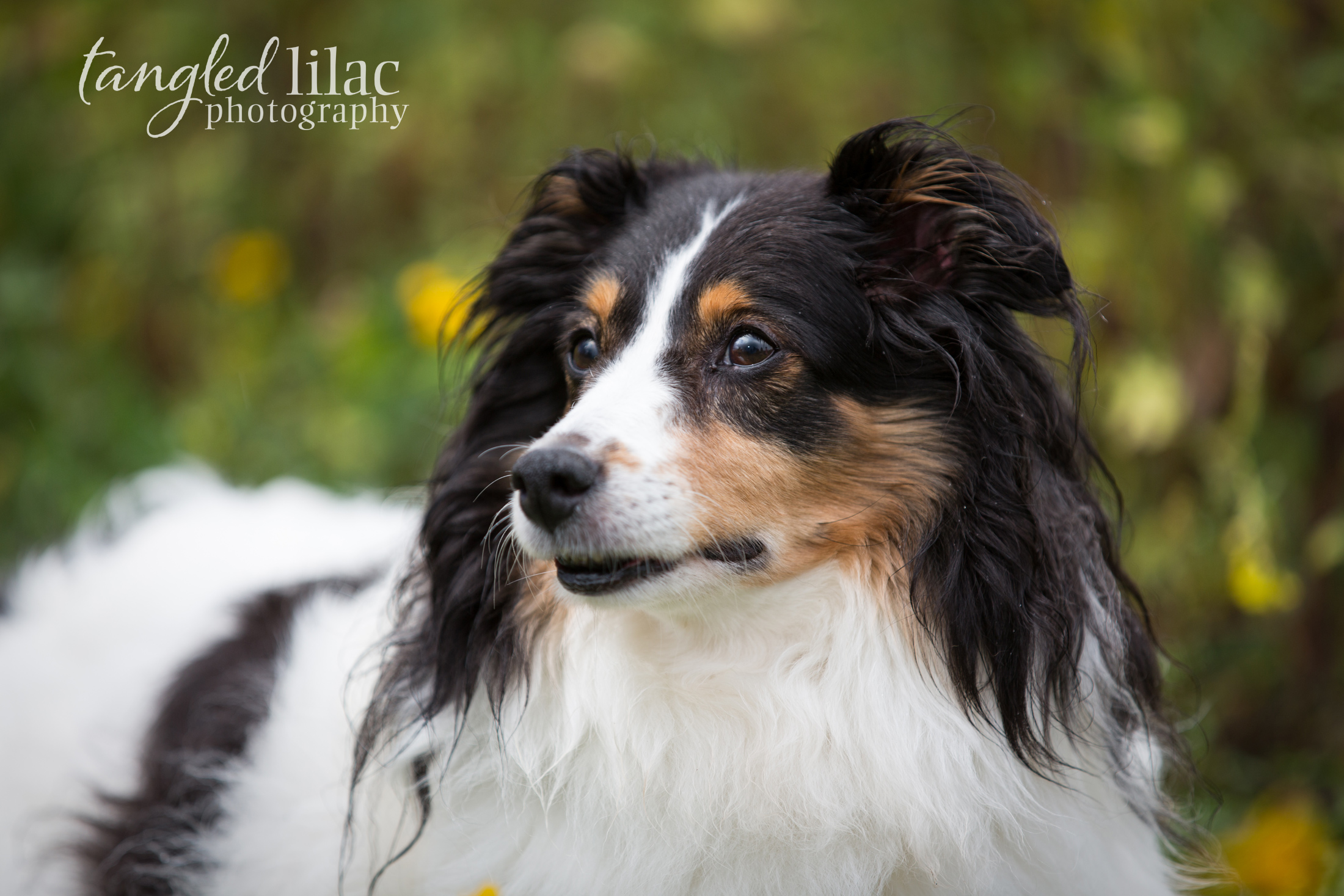 090-sedona-pet-photographer-flagstaff