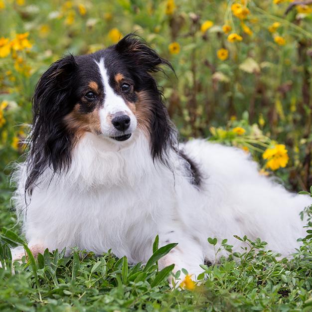 flagstaff pet photographer