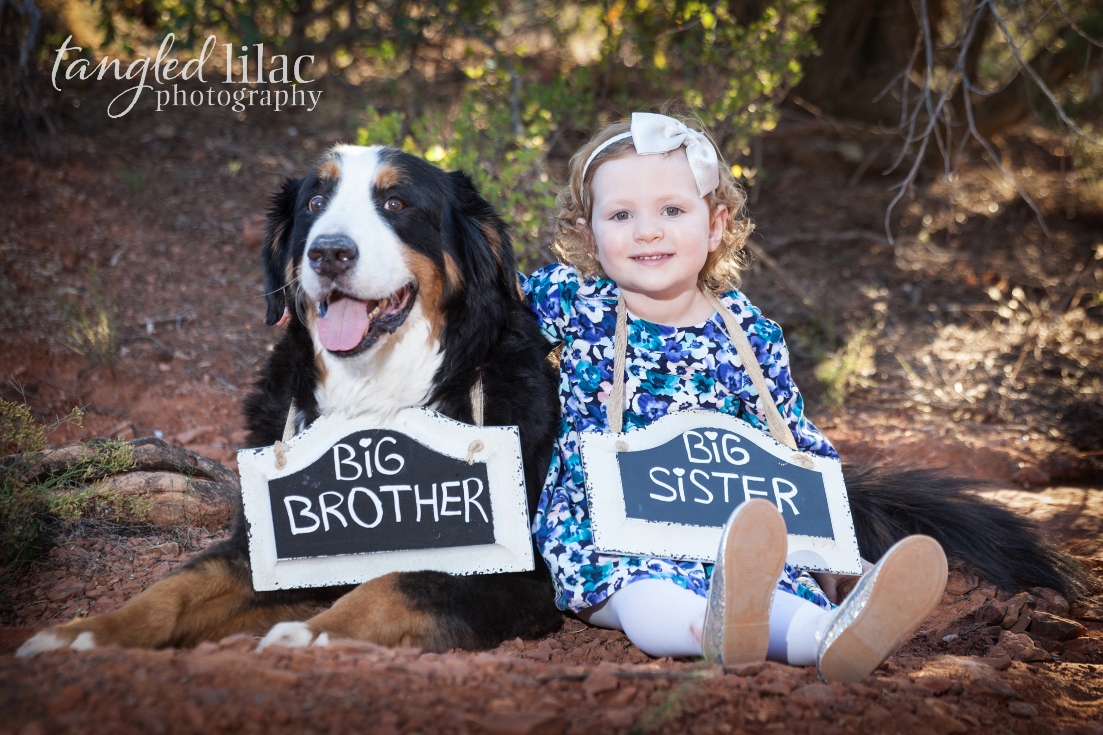 100-sedona-family-photographer-maternity-pet-dog-bernese-mountain-dog