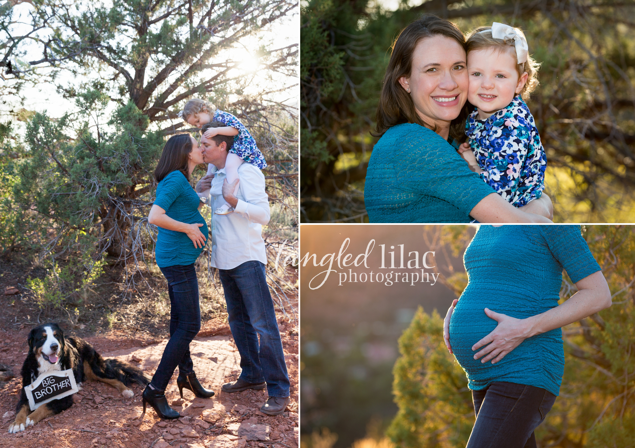 104-sedona-family-photographer-maternity-pet-dog-bernese-mountain-dog