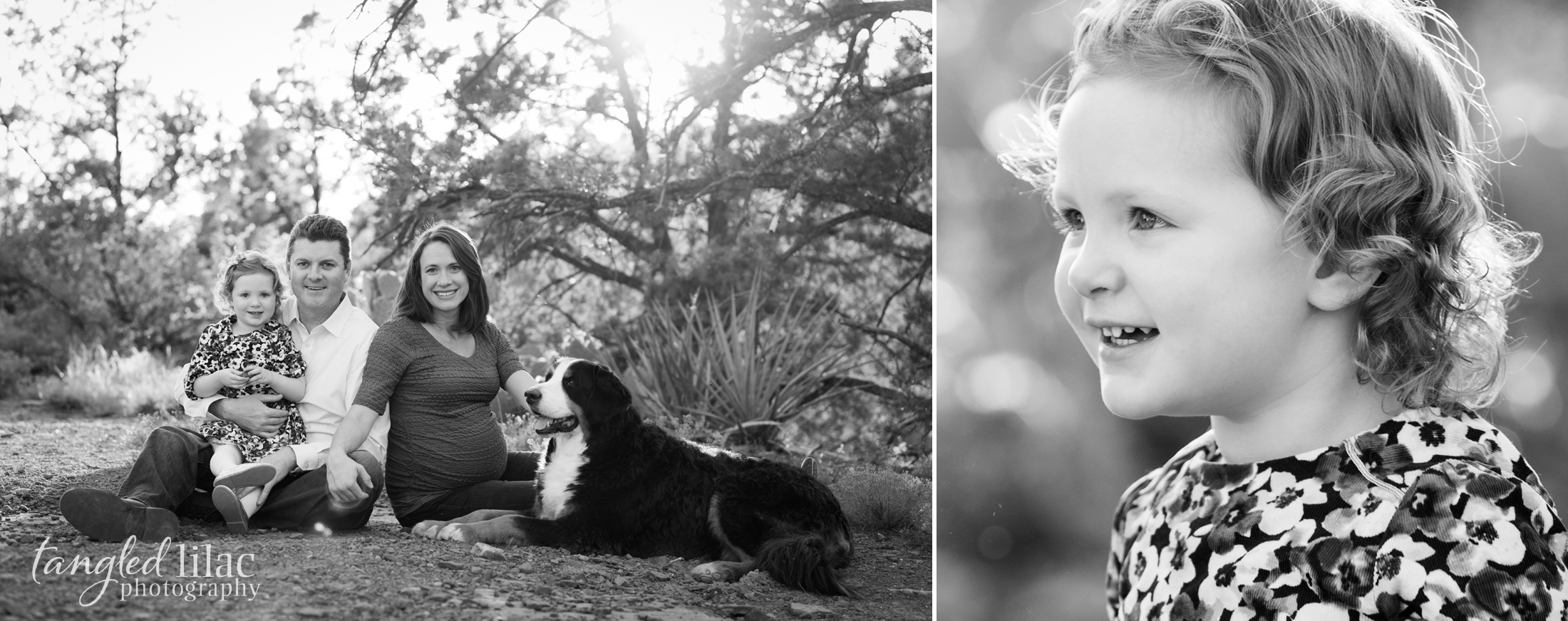 105-sedona-family-photographer-maternity-pet-dog-bernese-mountain-dog