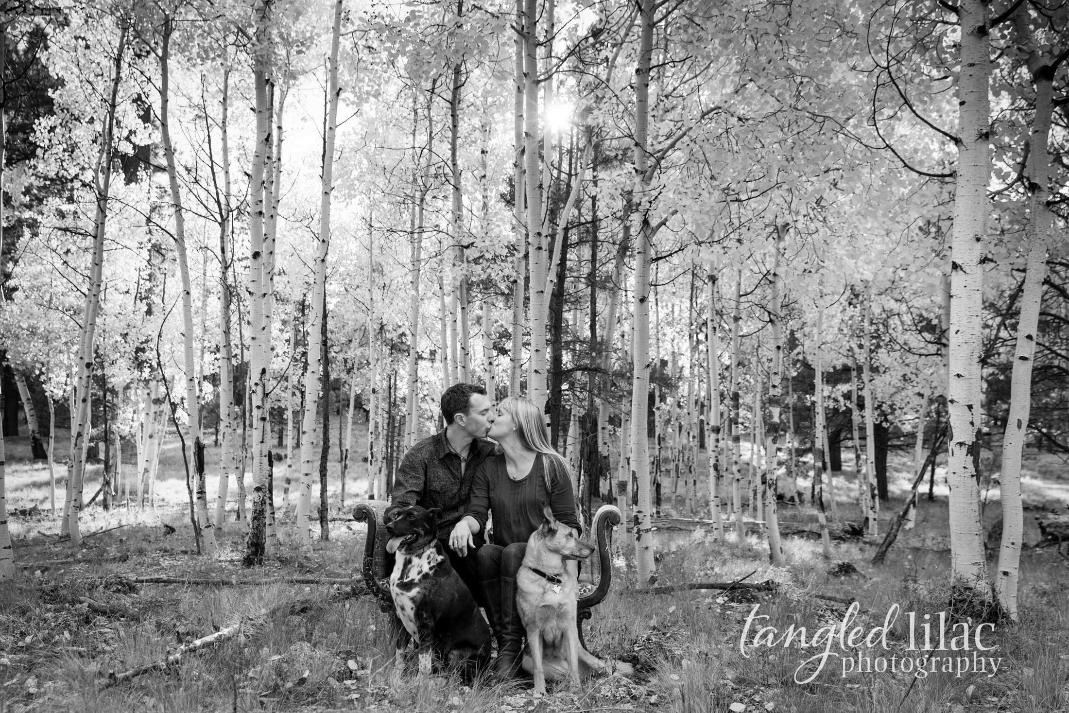 112-flagstaff-family-photographer-aspens-dogs-pets